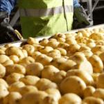 pepsico_chips_plant