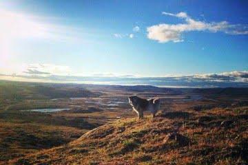 arctic-tundra