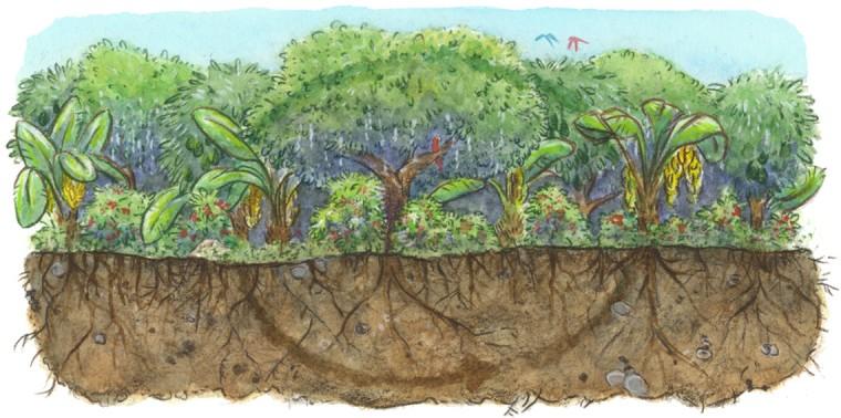 carbon_farming_
