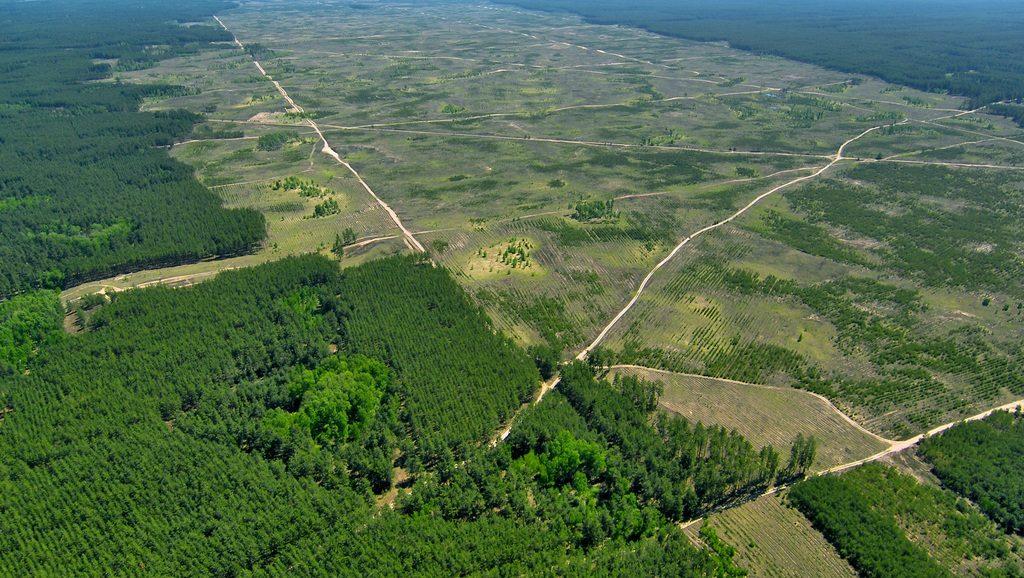 palm-oil-wide-deforestation