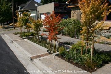 A sophisticated curb cut system watering street trees in Portland, Oregon.
