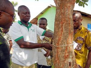 rainforestallianceghana-climate-education